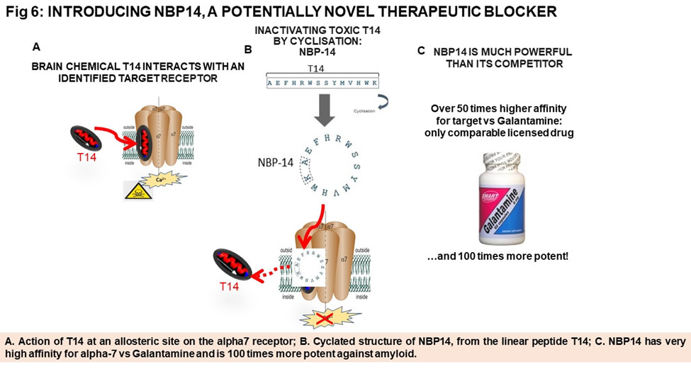 NBP14 as a therapeutic blocker